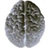 Биодобавки для мозга